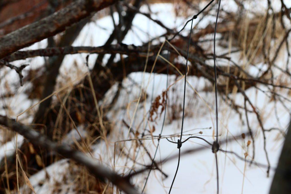 MANGE STEDER: Det er dessverre ikke vanskelig å finne vanskjøttede gjerder i Folldal. Blir de ikke fjernet, ligger de under busker, trær og lyng i mange år.