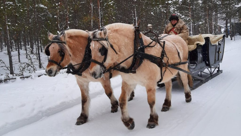 """KLARE FOR FILM: Martin Kjønsberg ute på treningstur med sine to fjordinger og """"kongesleden"""" som skal brukes i julefilmen som er under innspilling. Foto: Eris Davids"""